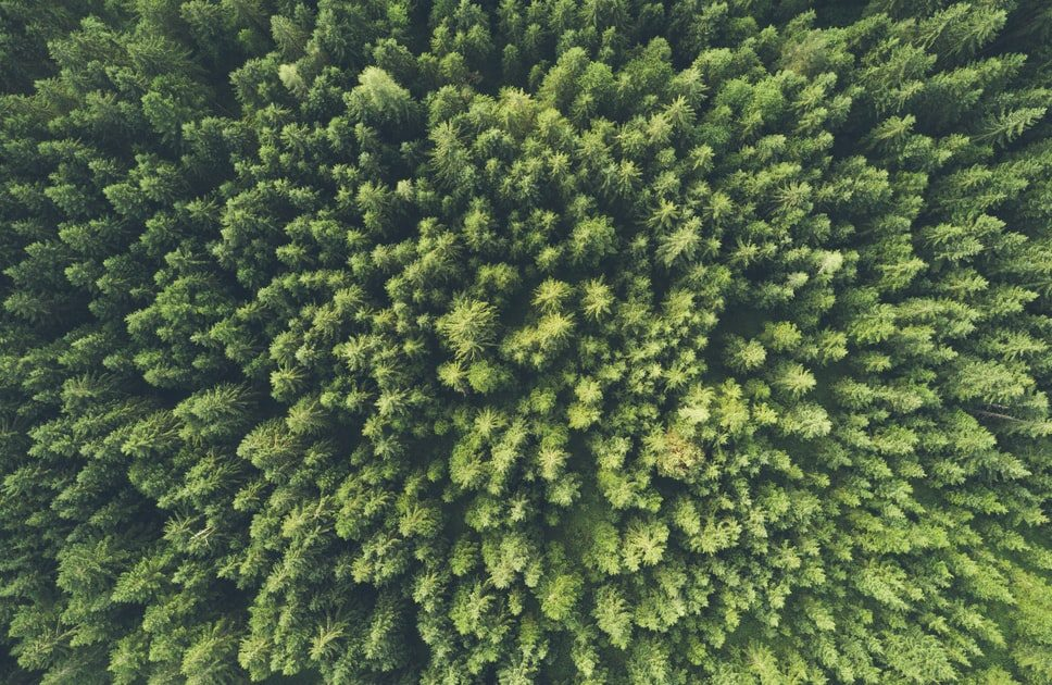 energy efficient mortgages green trees
